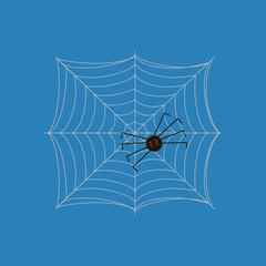 Spider on the web illustration