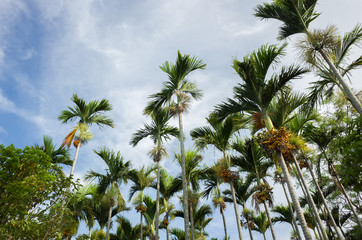 coconut tree on sky
