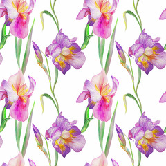 iris in the summer garden. watercolor art. pattern