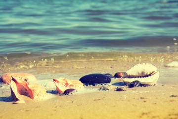 The shells and stones on the seashore. Sandy beach in sunny day. Toned and processing photos with soft selective focus.