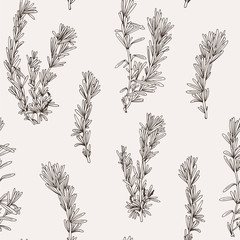 Seamless vector pattern with hand drawn rosemary