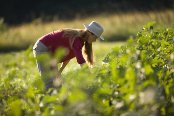 Mid-adult woman picking vegetables while on a farm.