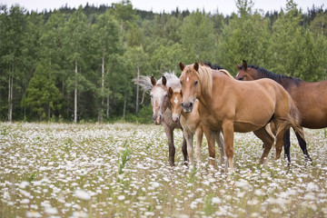 Herd of horses standing in a meadow