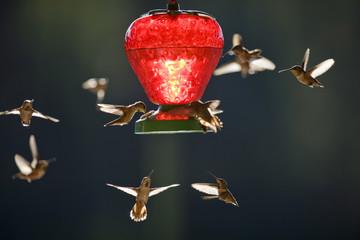 Tiny hummingbirds hovering around a bird feeder