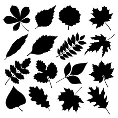 Vector set of black silhouettes of leaves on white background.