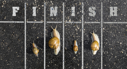 Snail run, near the Finish line, Winner sign on the ground, funn