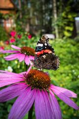 Beautiful butterfly on flower in the garden
