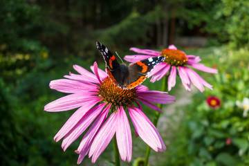 Beautiful butterfly on flower in the garden