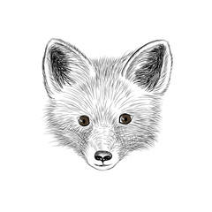 Fox. Wild animal fox looking at camera. Fox baby sketch face