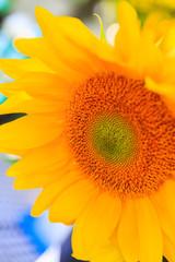 Sunflowers in the sun at farmer's market.