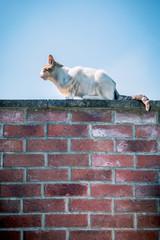 Le petit chat sur le mur