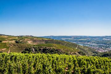 Champs de vignes dans la vallée du Rhône