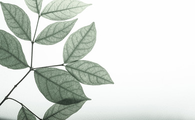 classic color leaves on mulberry paper texture for natural concept background