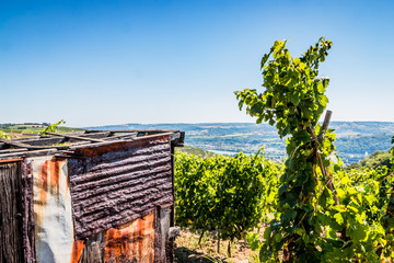 Cabane de vigneron et champs de vignes dans la vallée du Rhône