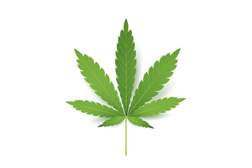 Realistic Marijuana leaf icon. Isolated on white background vector illustration. Medical Cannabis