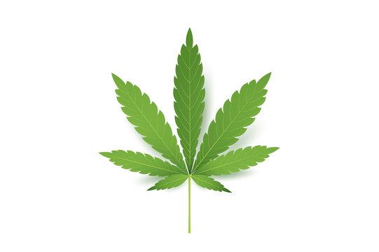 Realistic Marijuana leaf icon. Isolated on white background vector illustration. Medical Cannabis