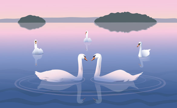 Swimming swans/Group of swans on the lake
