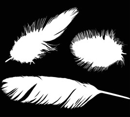 illustration with three different white feathers