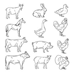 farm animals vector collection. Cow, pig, chicken, sheep, goat,