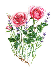 Watercolor botanical illustration of lavender and rose. Hand painting. Floral drawing for the greeting cards, invitations, personalized card and different decorations.