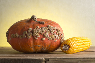 Big Beautiful ripe pumpkin and corn on old wooden table. Country style.