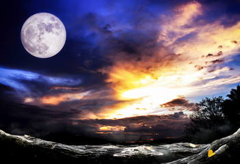 halloween background. night forest with full moon and wooden table, over light and high contrast