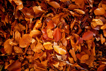 Red and Orange Autumn Leaves, color background.