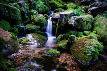 Stream of water with little waterfall flowing through rocks covered by moss