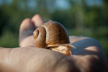 Lumaca con guscio a spirale
