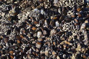 Sea Shells Texture