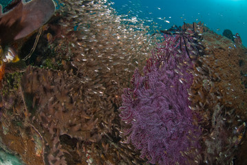 Fototapete - General Reef Scene, Raja Ampat, Indonesia