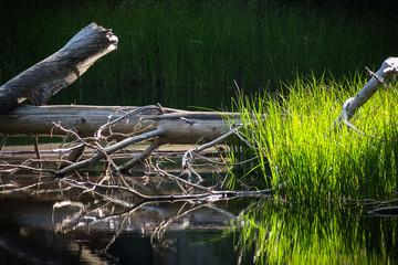 Yosemite Lake Mirror