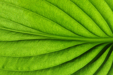 Close up on green leaf