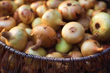 Ripe onion pile in basket in garden
