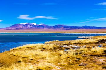Atacama Salar in Chile