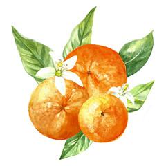 watercolor orange fruit isolated
