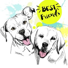 Vector hand drawn concept of labradoe retriever and pitbull terrier frienship. Best friends.