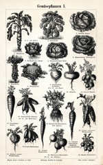 Vegetable crops 1(from Meyers Lexikon, 1895, 7/288/289)