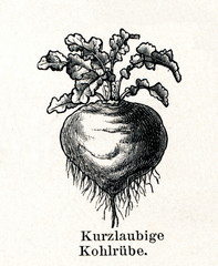 Kohlrabi (from Meyers Lexikon, 1895, 7/288/289)