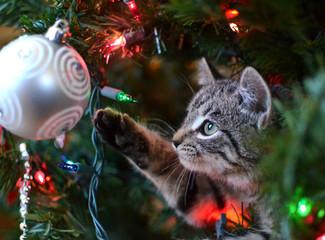 Kitten in a Christmas tree