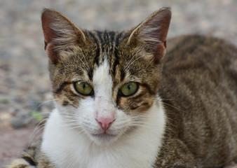 Young cat face closeup. Cat looking at camera.