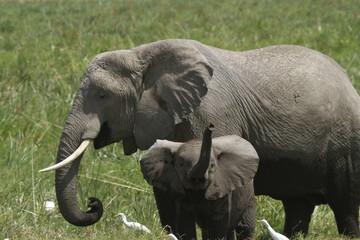 Elephant Baby Greeting