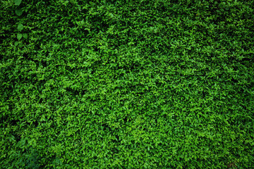 green leaves natural wall.