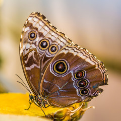 Beautiful butterfly on the plant