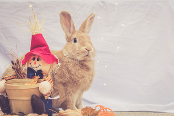 Beautiful Rufus colored rabbit sits upright next to autumn scarecrow decoration with simple background and room for text in warm retro look