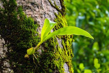 Green creeper plants on rock