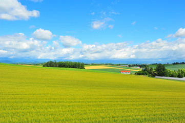 Landscapes of Countryside in Hokkaido, Japan