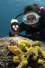 Unterwasser - Riff - Fisch - Anglerfisch - Schwamm - Taucher - Tauchen - Curacao - Karibik