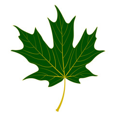 vector green maple leaf