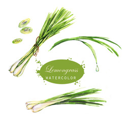 Watercolor hand-drawn lemongrass drawings. Isolated eco natural food herbs illustration on the white background